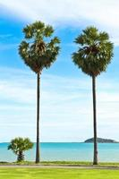 Sugar palm trees and blue sea photo