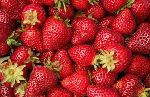 Close up of fresh picked strawberries photo