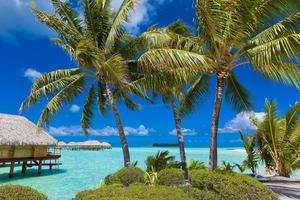 Tropical Island Paradise photo