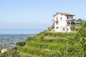 house on a vineyard photo