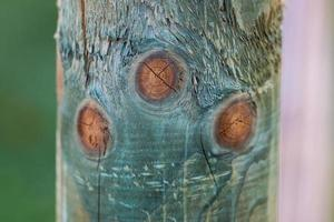 Circles on the surface of a log