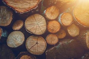 cortes de madera seca foto