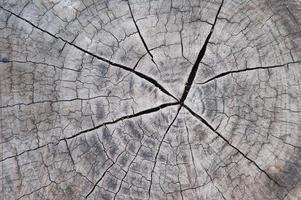 Stump photo