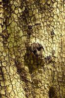 Complex cracked bark pattern