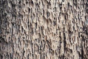 abstract texture on dry tree photo