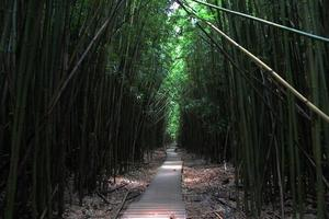 Bambuswald photo