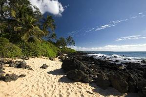 Tropical beach with palm trees, golden sand and volcanic rock