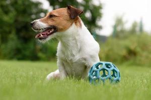 el perro perezoso no quiere jugar con la pelota.