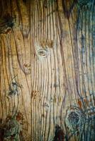 Oak wood texture photo