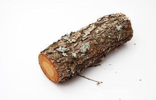 Fire wood in studio photo