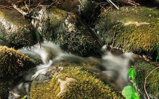 Piedras en el bosque de bosques. corriente en el parque de oliva gdansk.