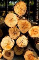 Piled tree trunks closeup