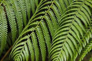 Beautiful fern leaves photo