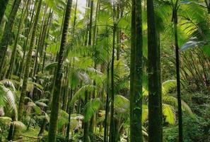 Trees in Hawaii tropical botanical garden