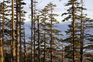 Ocean through the forest at sunrise. Pacific Rim National Park photo