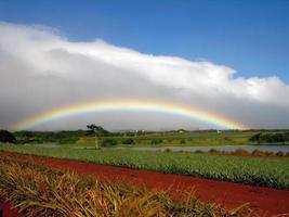 arco-íris na plantação de dole