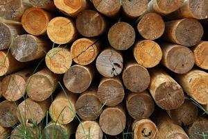 troncos apilados y cortados
