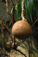arbre de boulet de canon