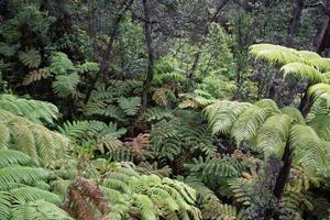 Ferns in the undergrowth