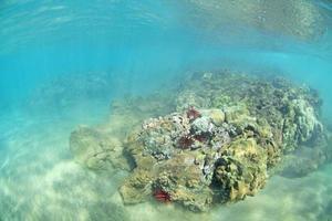 Wailea Reef photo