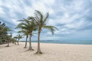 beach fringed with palm trees