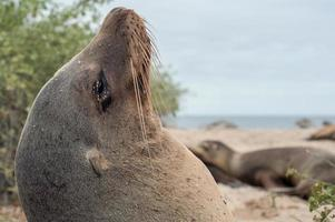 Galápagos animais