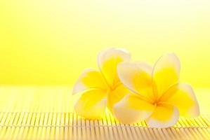 Leelawadee flower on bamboo background photo