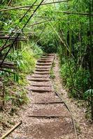 à travers le bambou