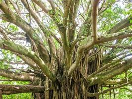 Rain forest tree photo