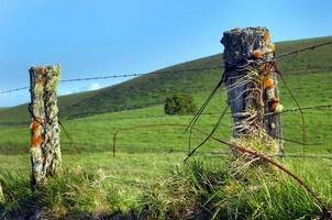 Big Island Upcountry Fence photo