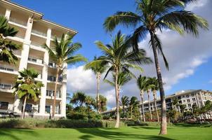 Palm trees and condos, Maui photo