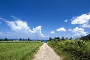 camino que desciende sobre el mar foto