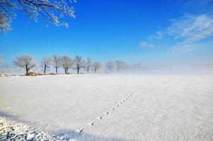 Tracks into the mist