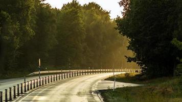 alleen rijden op een zonverlichte bosweg in Zweden