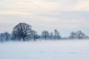 Misty day with hoar frost
