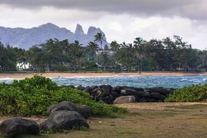 coqueiro na praia de Kapaa Havaí