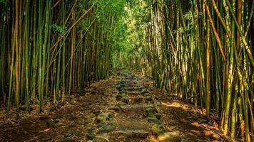 caminho através da floresta de bambu
