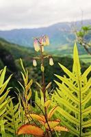 flor hawaiana en las montañas