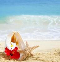 Seashell and starfish with tropical flowers on sandy beach photo