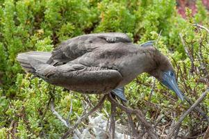 Galapagos Animals photo