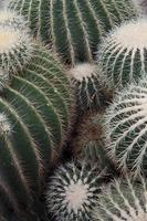 familia de cactus foto