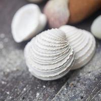Sea shells frame on vintage shabby wood