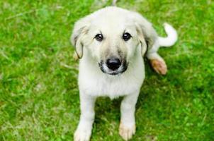 puppy portrait photo