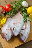 sea bream photo