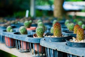 Portraits Cactus