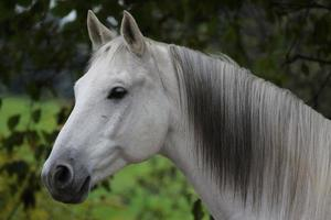 Pferd, Portrait photo