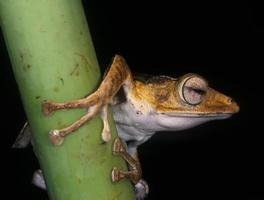 Frog portrait photo