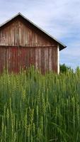 granero de campo finlandés foto