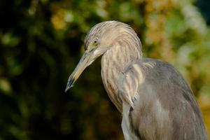 Bird portrait photo