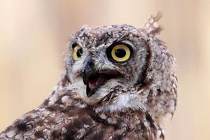 portrait owl photo